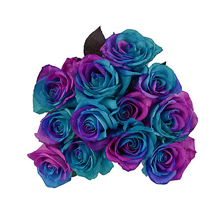 Roses, Tinted Pink and Blue (50 stems)