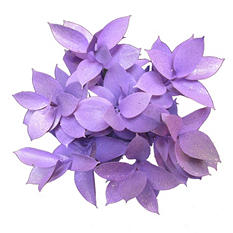 Ruscus Painted & Glittered Lavender (168 Stems)