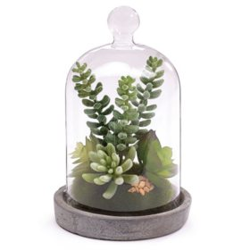 Succulent Dome - Set of 4