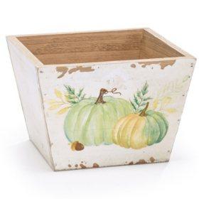 Cream Pumpkin Planter (6 ct.)