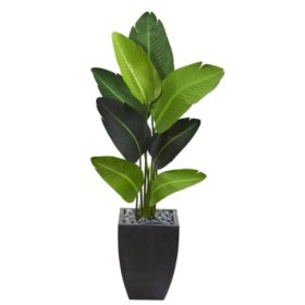 "51"" Artificial Travelers Palm Tree in Black Planter"