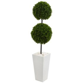 "56"" Artificial Double Ball Boxwood Topiary Tree in Tall White Planter, UV-Resistant"