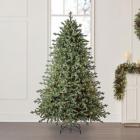 Member's Mark 7.5' Linden Spruce Christmas Tree