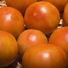 Tomatoes (25 lb.)