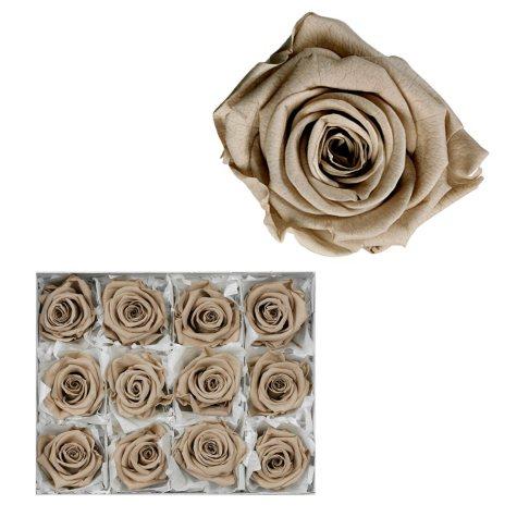 Infinite Rose - Cappuccino - 12 Rose Heads