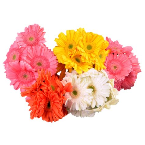 Gerbera Daisies, Assorted Pastels (50 stems)