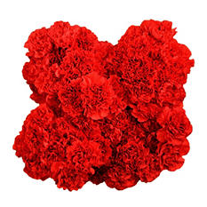 Carnations, Red (100 stems)