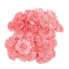 Carnations, Pink (100 stems)