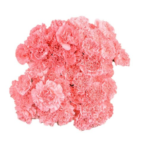Carnations - Pink - 100 Stems