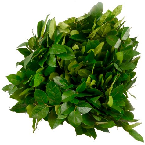 Salal - Greenery - 5 Bunches