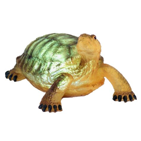 Terry the Turtle