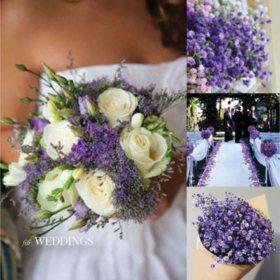 Gypsophila, Tinted Purple Ombre (60 stems)