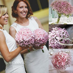 Gypsophila, Tinted Pink Ombre (60 stems)