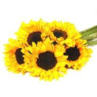 Sunflowers, Yellow (40 stems)