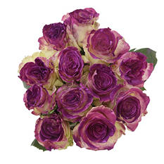 Painted Fantasy Rose, Purple (50 stems)