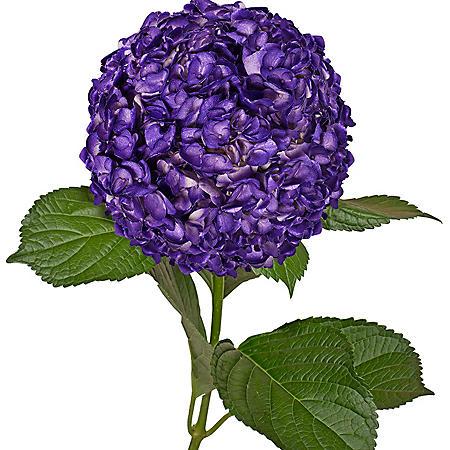 Painted Hydrangeas, Metallic Purple (14 stems)