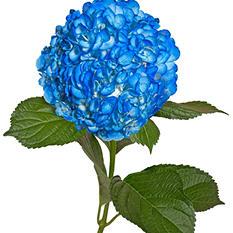 Painted Hydrangeas, Dark Blue (14 stems)