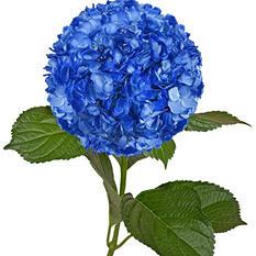 Painted Hydrangeas, Metallic Blue (Choose 14 or 26 stems)