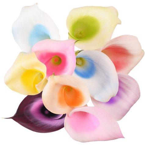 Color Splash Mini Calla, Assorted Rainbow (50 stems)