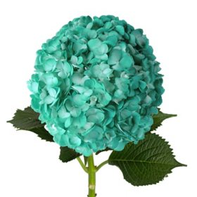 Painted Hydrangeas, Aqua (14 stems)