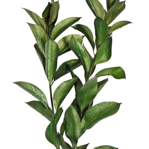 Painted Ruscus, Metallic Green with Glitter (Choose 60 or 120 stems)