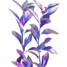 Painted Chameleon Ruscus, Silver, Lavender, Hot Pink, Blue (Choose 60 or 120 stems)