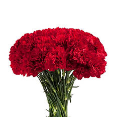 Carnations - Red (200 stems)