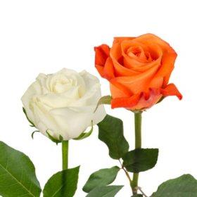 Roses, Orange and White Combo (125 stems)