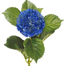 Painted Mini Green Hydrangea, Metallic Blue with Glitter (Choose 20 or 40 Stems)