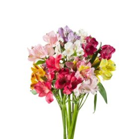 Alstroemeria, Assorted Colors (50 or 90 Stems)