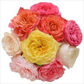 Garden Roses, Rainbow (36 stems)