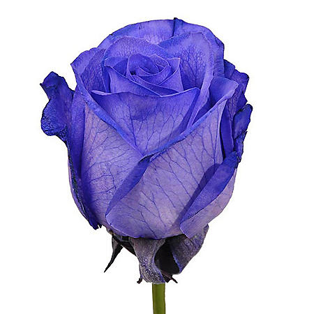 Roses, Tinted Purple (choose 50, 75 or 100 stems)