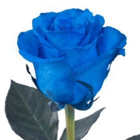Roses, Tinted Blue (choose 50, 75 or 100 stems)