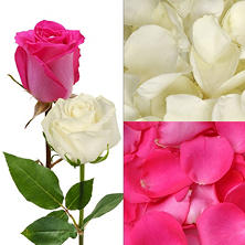 Roses and Petals Combo Box, Hot Pink and White (75 stems)