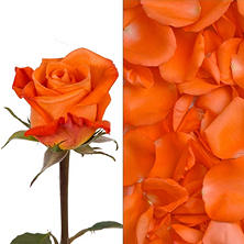 Roses and Petals Combo Box, Orange (75 stems)