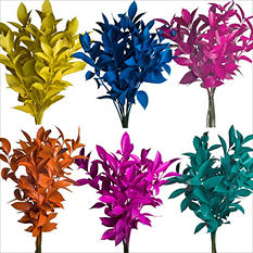 Ruscus - Painted Summer Assorted - 120 Stems