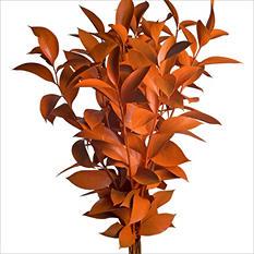 Ruscus - Painted Orange - 120 Stems
