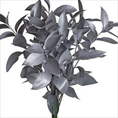 Ruscus - Painted Silver - 120 Stems