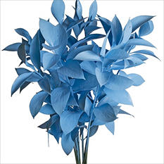 Ruscus - Painted Pastel Blue - 120 Stems