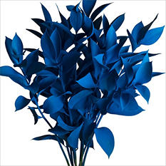 Ruscus - Painted Blue - 120 Stems