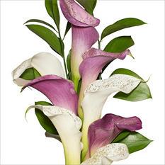 Mini Calla Cascade Bouquet - Lavender and White - 100 Stems
