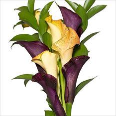 Mini Calla Cascade Bouquet - Yellow and Purple - 100 Stems