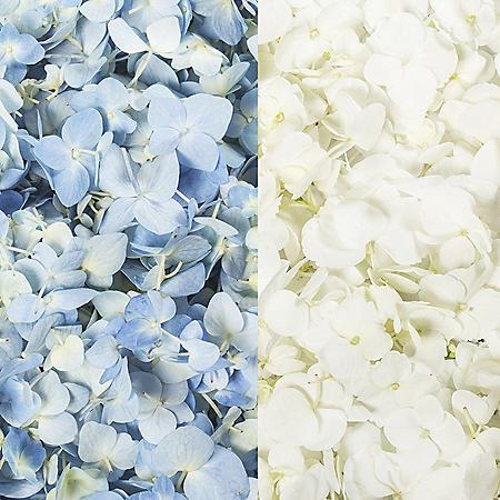 Hydrangea Petals, Blue and White (16 pk.)