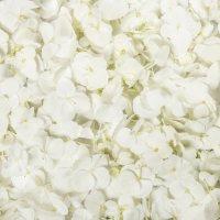 Hydrangea Petals, White (choose 16 or 26 packs)