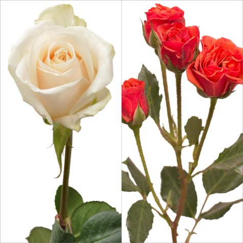 White Roses and Orange Spray Roses Combo (105 stems)