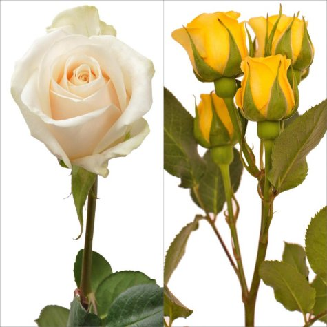 White Roses and Yellow Spray Roses Combo (105 stems)
