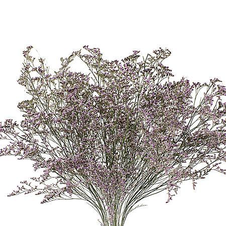 Limonium, Natural (15 bunches)