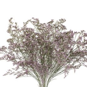 Limonium, Natural (15 bunches)
