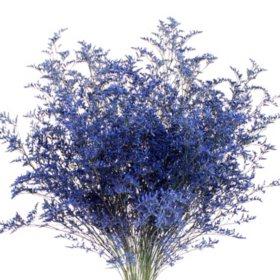 Limonium, Tinted Blue (15 bunches)