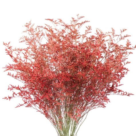 Limonium, Tinted Red with Glitter (15 bunches)